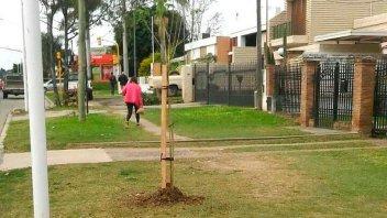 Municipios trabajan en el Plan Forestal 2030: un árbol cada 4 habitantes