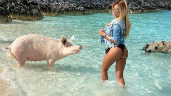 En bikini y rodeada de cerdos: Las exóticas vacaciones de espectacular rubia