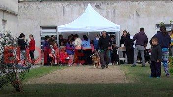 Mega operativo de castración de mascotas: lo repetirán cada dos meses