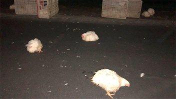 Camión que trasladaba pollos volcó en la Ruta 12 y hospitalizaron al chofer