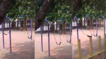 Video: un columpio