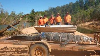 Australia: Capturan a un cocodrilo gigante de 4,7 metros de largo y 600 kilos