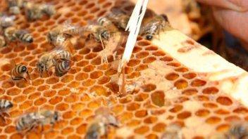 Uruguay abre el mercado para las abejas reinas argentinas
