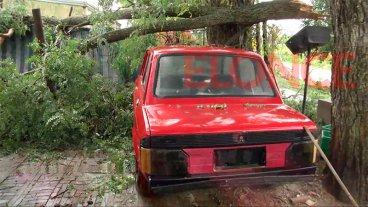 Cayeron las ramas de un añejo árbol y causaron importantes daños en dos casas