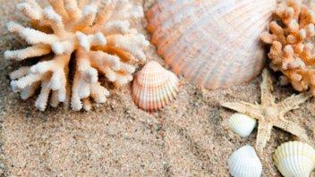 Turista fue condenada a cárcel por llevarse caracoles de mar de una playa