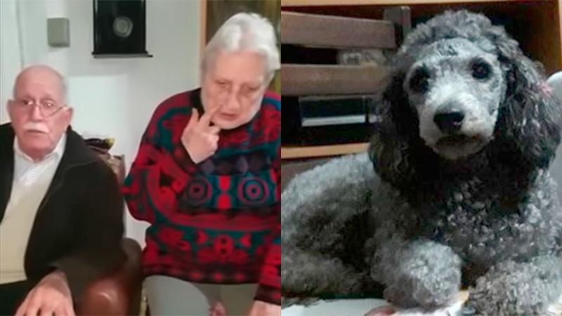 Apareció Mara, la perrita que sus dueños ofrecían la jubilación de rompensa