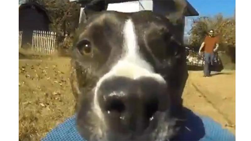 Perro roba una GoPro y filma su fuga en video viral
