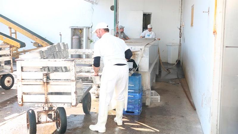 Resultado de imagen para Cooperativa Tambera está a punto de quebrar: Tiene 20 empleados