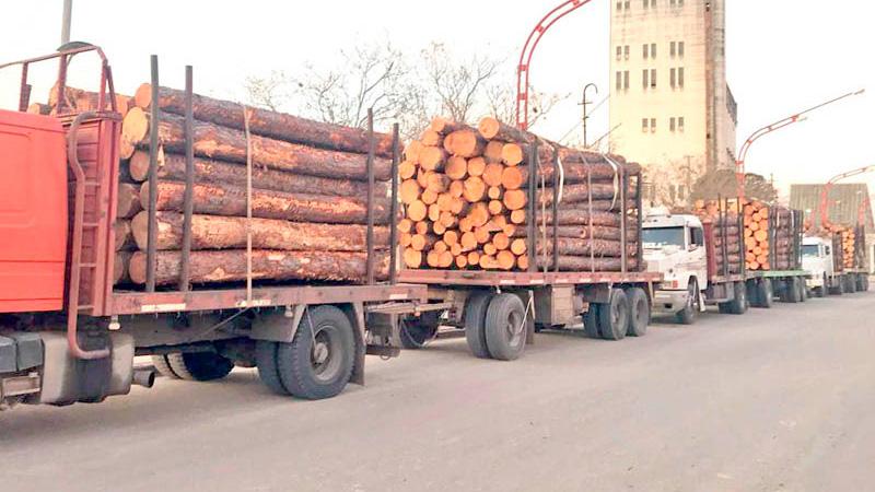 La madera proviene de la zona de Concordia