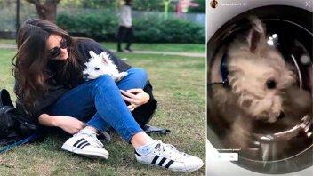 Amenazaron de muerte a joven entrerriana que metió su perrito al lavarropas
