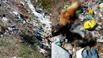 Misterio por el hallazgo de unos 20 perros muertos en basural de zona rural
