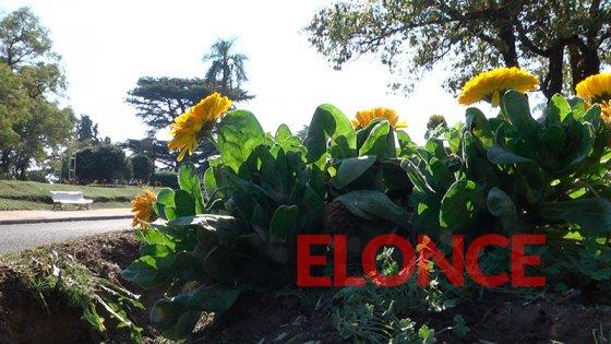 Primavera a pleno sol: Pronostican un fin de semana espléndido