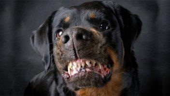 Un niño de un año murió tras ser atacado por dos perros