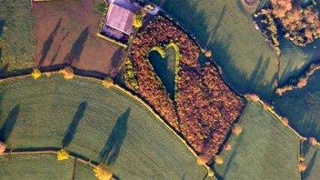 Un viudo plantó 6.000 árboles para dejarle un mensaje a su esposa