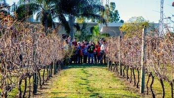 Crece la producción vitivinícola en Entre Ríos