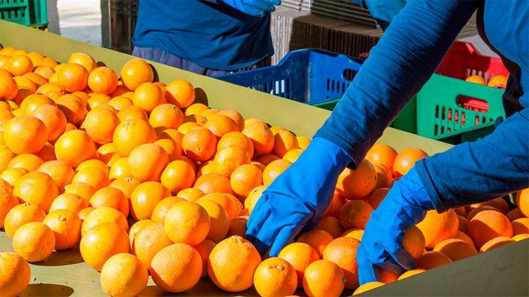 Sancionaron la ley de emergencia económica para el sector citrícola