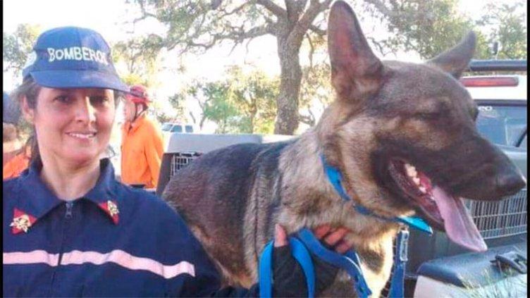 Se extravió Maní, un perro de Bomberos Voluntarios entrenado para rescates