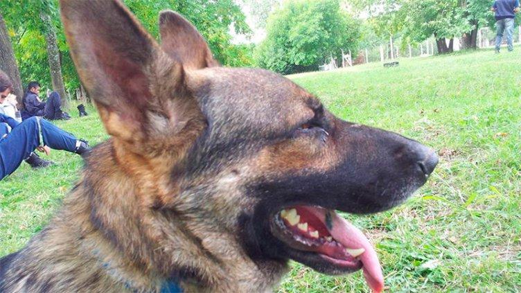Hay una pista para hallar al perro rastreador de Bomberos Voluntarios