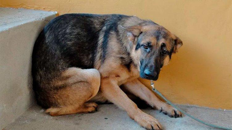 ¿Cómo afecta la pirotecnia a las mascotas?: qué hacer