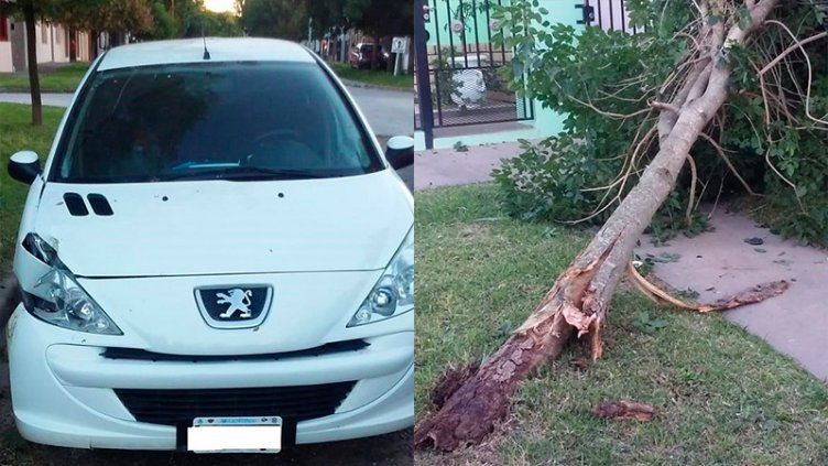 Chocó contra un árbol e intentó lesionar a un inspector de tránsito