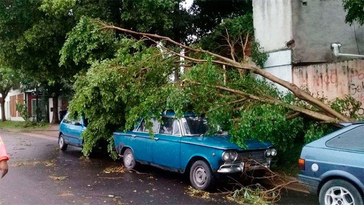 Árboles arrancados de raíz y ramas sobre los autos: Imágenes
