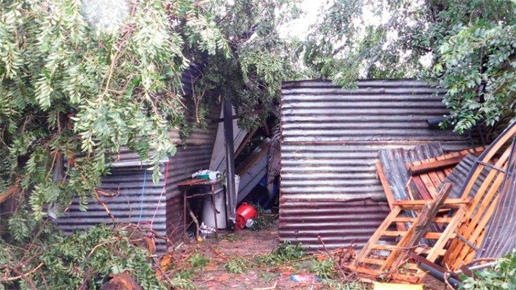 Padre e hijo murieron tras ser aplastados por un árbol en su casa de La Plata