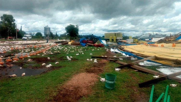 Fotos: El temporal arrasó con galpones de crianza y murieron miles de pollos