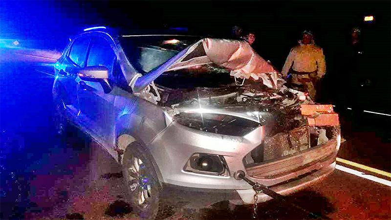 Médica chocó con su auto contra dos caballos que estaban en la ruta