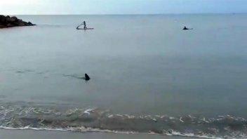 Filmaron a un tiburón en una playa de la costa bonaerense