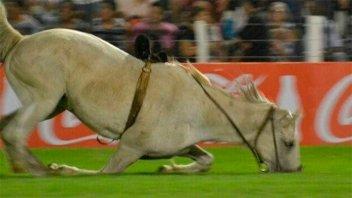 Jineteada en Jesús María: Practicaron eutanasia a un caballo tras grave caída