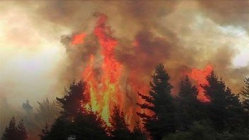 Denuncian pérdidas incalculables por incendios forestales en Chile