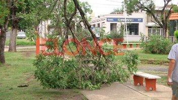 Árboles caídos y viviendas anegadas tras temporal en Paraná
