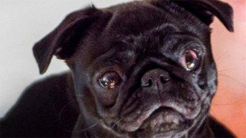 Insólito: confiscan y venden una perra para saldar la deuda de una familia