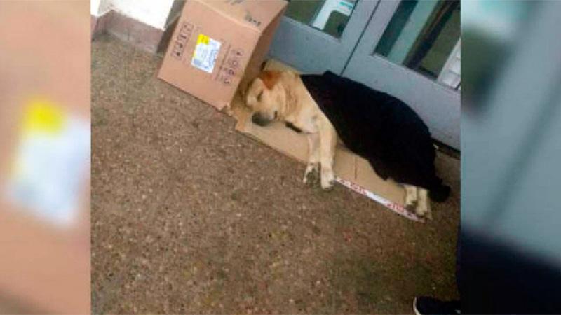 Resultado de imagem para toto, labrador perro en Salvador de Jujuy.