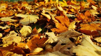 Adiós al verano: ¿A qué hora será el equinoccio de otoño?