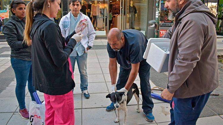 Ante el hallazgo de un murciélago con rabia en Paraná, vacunan a perros y gatos