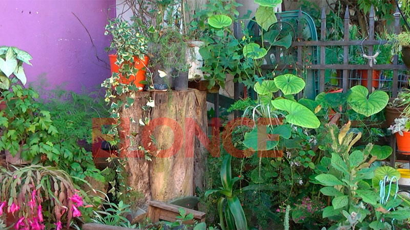 Plantas que estarán en la feria mascotera del domingo