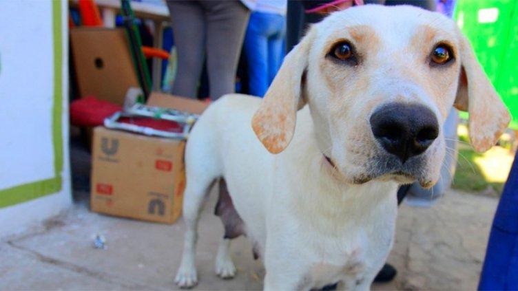 Impulsan un proyecto contra el maltrato animal con multas de hasta $ 50 mil