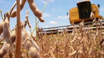 El tiempo seco y cálido en EEUU favorece la suba de precios de los granos