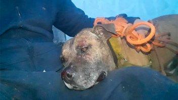 Denuncia que un policía hirió con disparo de escopeta a su perro Pitbull