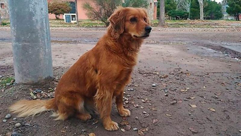 Perrito lleva más de un año esperando a su dueño detenido