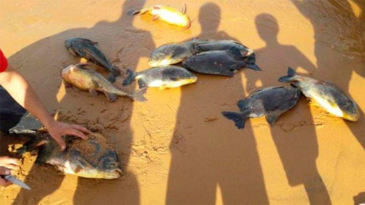 Afirman que el apagón provocó mortandad de peces en el río Paraná