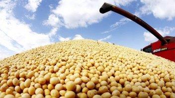 El productor debió cosechar 2.480 kg/ha de soja de primera para cubrir costos