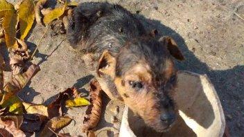 Hallaron tres perros muertos y cinco en pésimo estado en el patio de una casa