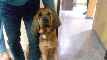 Le robaron su perro de raza en Paraná y le pedían mil pesos de rescate
