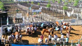 Desde toros a faisanes, los animales que serán protagonistas de Expo Rural