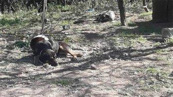 Un hombre fue atacado por tres perros y terminó en terapia intensiva
