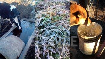 Fotos: Así se vio la helada en los campos entrerrianos