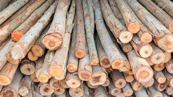 Entre Ríos exportará eucalipto a China