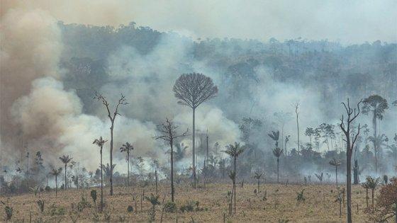 Peligra el acuerdo UE-Mercosur por los incendios en el Amazonas: Los motivos